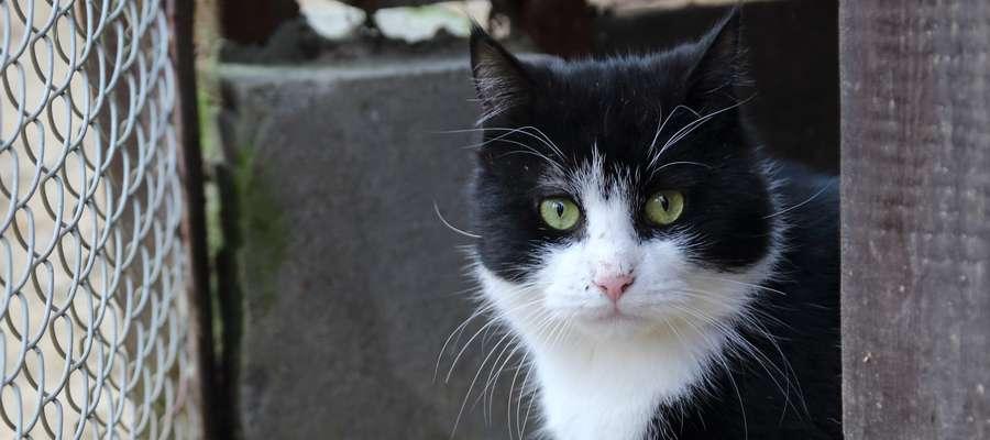 Chcesz pomóc wolno żyjącym kotom - zgłoś się po budkę do Zwierzyńca św. Franciszka