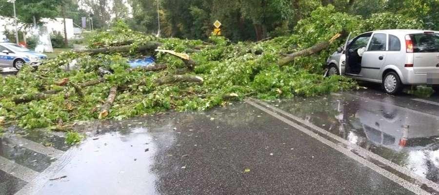 Spadające konary drzew uszkadzały samochody
