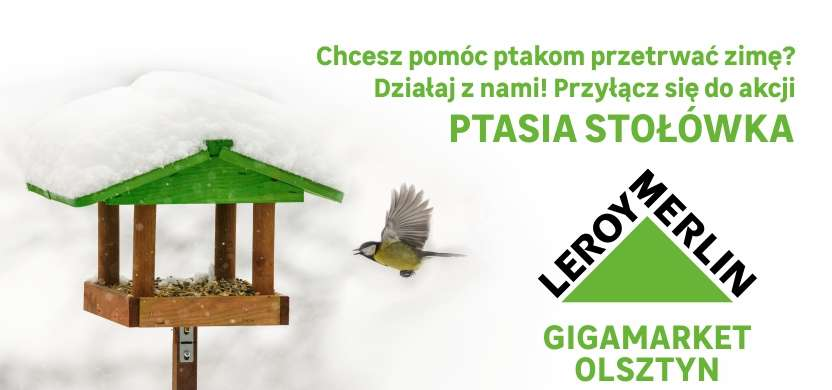 Chcesz Pomóc Ptakom Przetrwać Zimę Przyłącz Się Do Akcji