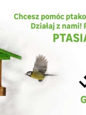 Chcesz pomóc ptakom przetrwać zimę? Przyłącz się do akcji!