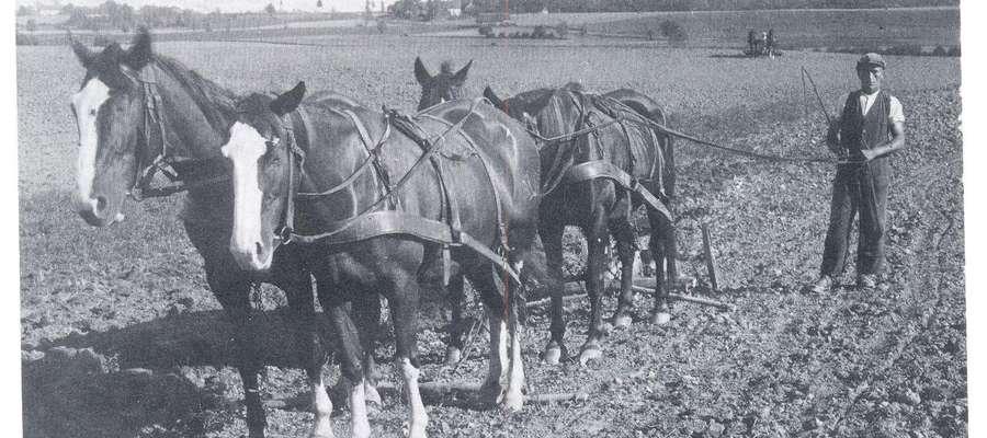 Rok 1937 - Stegny pod Pasłękiem. Prace pożniwne