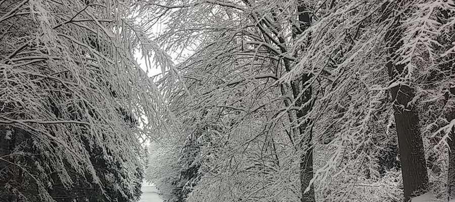 Zimowo na Mazurach