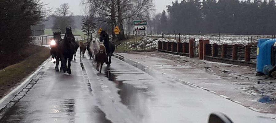 Spłoszone konie przebiegły przez Gierzwałd