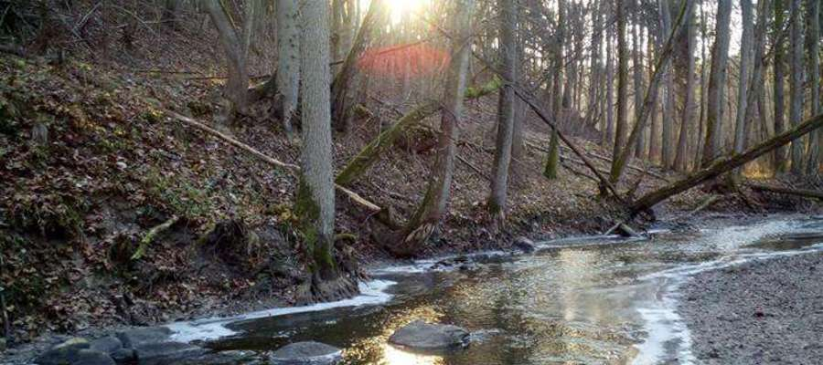 Rzeka Pisa w lesie między Galinami a Mintami