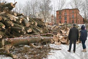 Kilkanaście drzew wycięto nad jednym z jezior w Olsztynie [ZDJĘCIA]