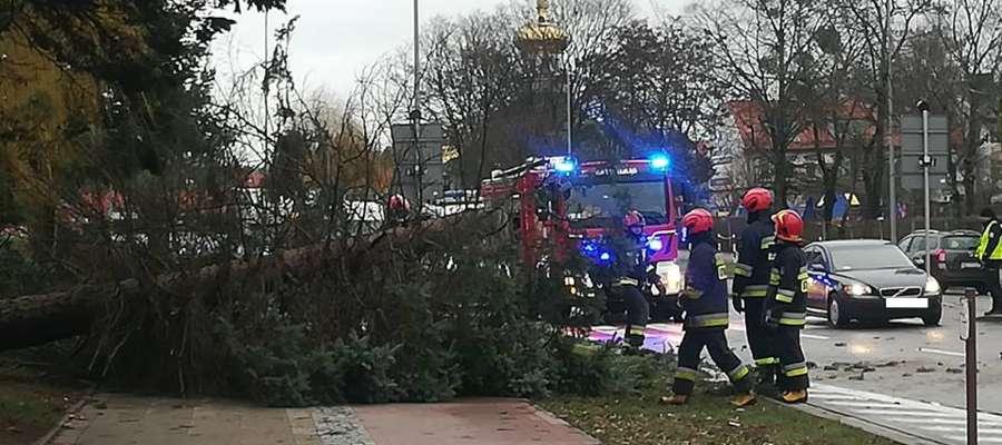 Powalone drzewo na ul. Nowowiejskiej