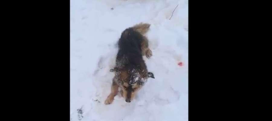 Weterynarze stwierdzili u psa krwotok z nosa, perforację jamy nosowej, pękniecie podniebienia twardego, uszkodzenie języka