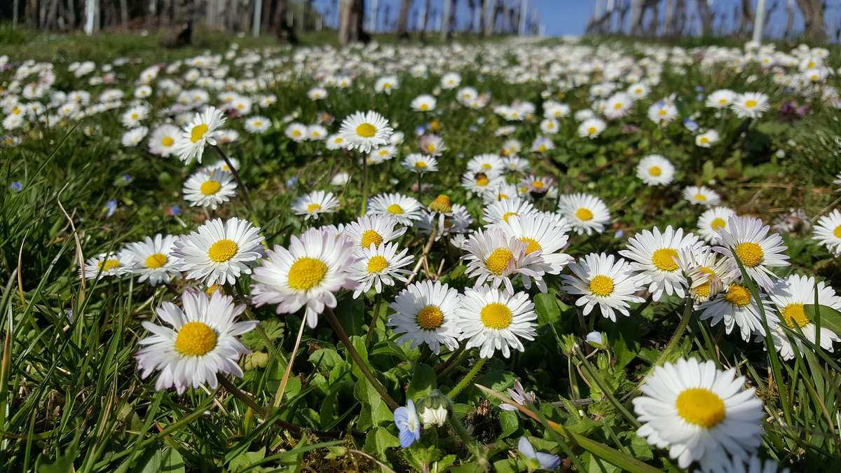 Wiosna na trawniku - full image