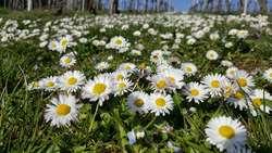 Wiosna na trawniku