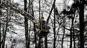 Strażacy interweniowali w parku Modrzewie [zdjęcia]