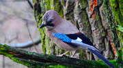 Centrum Edukacji Ekologicznej zaprasza na obserwacje ptaszków