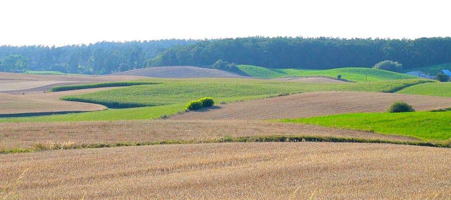 Pola uprawne w Łąkorzu