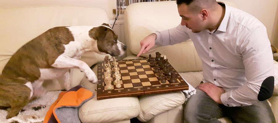 """Szachy to gra dla wszystkich. Czworonożny """"Tiger"""" pokazuje, że... dosłownie!"""