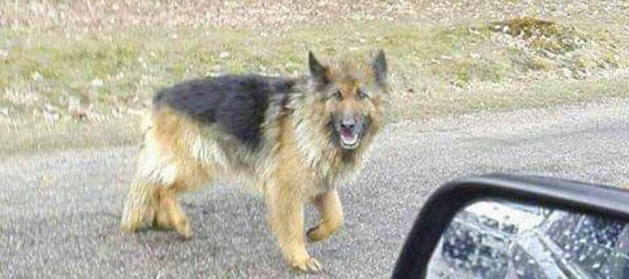 Zwierzę porzucił kierowca samochodu o numerze rejestracyjnym zaczynającym się od NDZ