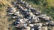 Nad Zalewem strzelać do ptaków nie będzie można? Prokuratura występuje do sejmiku województwa