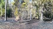 Palił się las w Wiartlu Małym