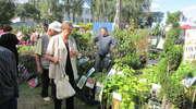 Wiosenne targi w Starym Polu coraz bliżej