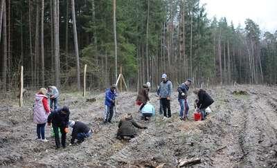 Miłośnicy lasu w akcji. Tysiąc małych sosen posadzonych
