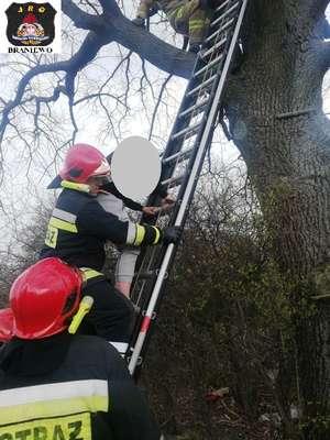 Chłopiec nie mógł zejść z drzewa. Pomogli strażacy