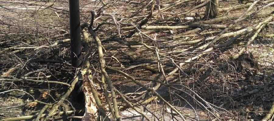 Złamane drzewo usunięto ze ścieżki, ale pozostawiono je w Lasku Miejskim. Dlaczego? Tłumaczymy w artykule