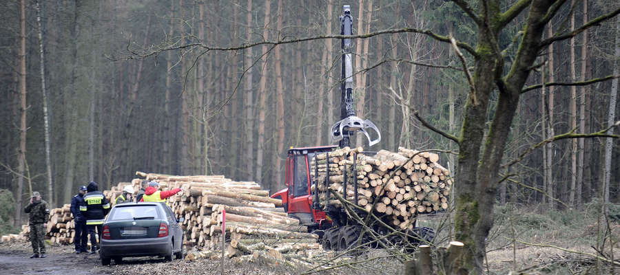 W miejscu planowanego przekopu w lutym wycięto ok. 10 tysięcy sztuk drzew