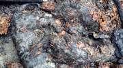 Strażacy znaleźli ciała kociąt podczas akcji gaszenia pożaru