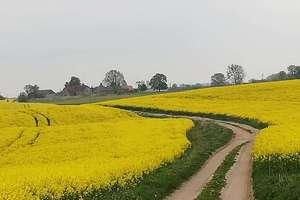 Zdjęcie Tygodnia: Warmiński krajobraz w okolicach Warmian