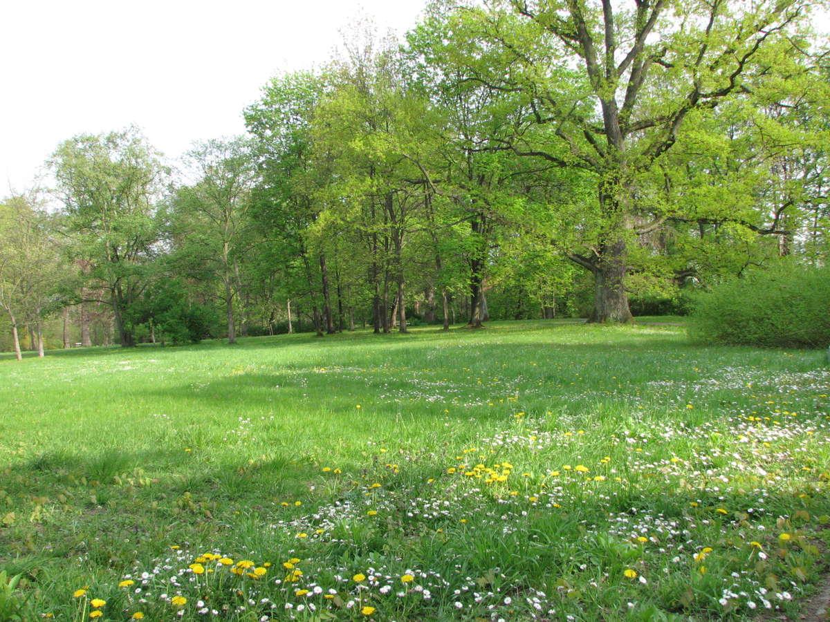 Łąka kwietna w parku