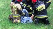 Strażacy i strażnicy pomogli uwięzionej sarnie