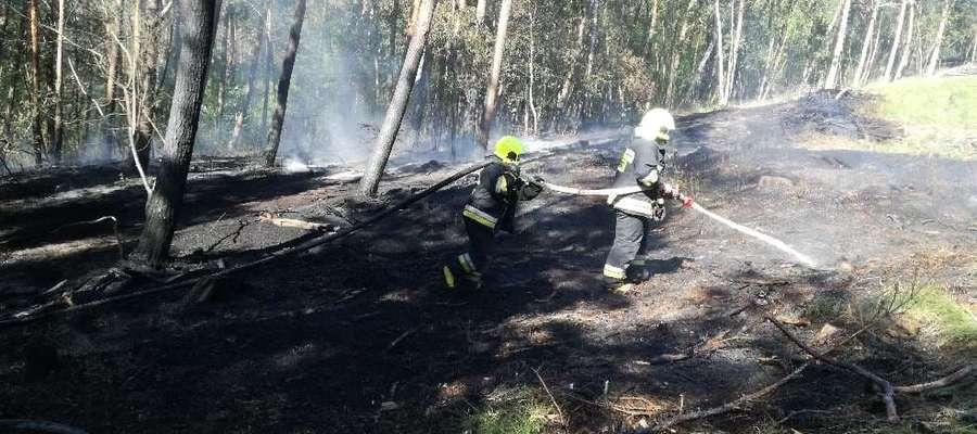 Pożar lasu Nadleśnictwa Elbląg