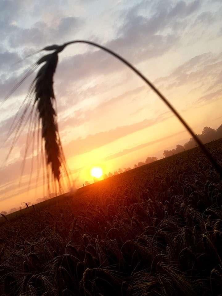 Zachód słońca koło Rusajn. - full image