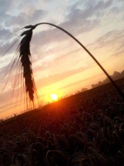 Zachód słońca koło Rusajn.