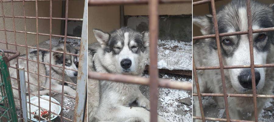Pies został znaleziony w poniedziałek rano