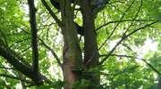 Policyjny negocjator rozmawiał na drzewie z desperatem