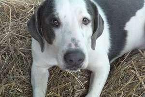 W lidzbarskim przytulisku na adopcję czeka siedem psów