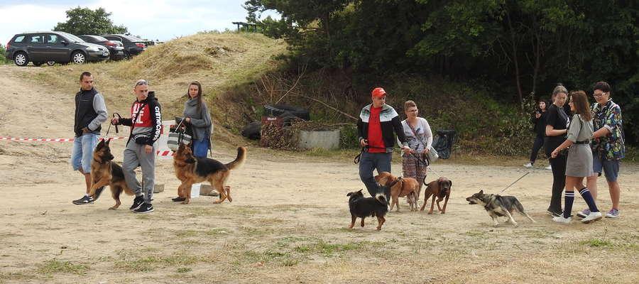 Na piknik właściciele zwierząt przychodzą ze swoimi psami