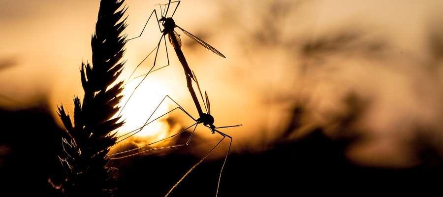 Najwięcej komarów żyje w tropikach i subtropikach. Tam jest ich około 2 tysiące gatunków. W Polsce żyje około 40-50 gatunków.