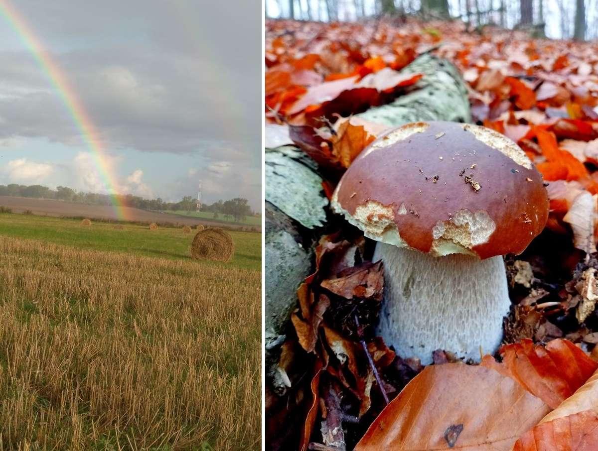 Dwa Zdjęcia Tygodnia. Oba związane z grzybobraniem - full image