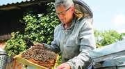 Pszczoły czynią nas lepszymi