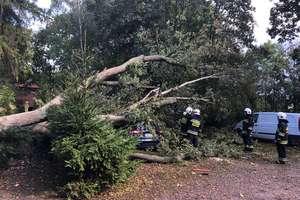 Drzewa powalone przez trąbę powietrzną zniszczyły kilka aut [VIDEO]