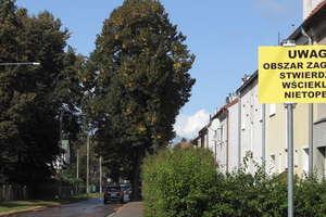Dziś stanęły żółte tablice ostrzegające przez wścieklizną