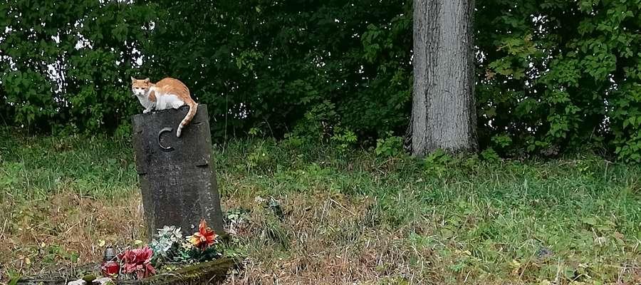 Cmentarz w Głotowie