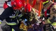 Braniewscy strażacy uratowali psa [ZDJĘCIA]