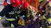 Strażacy uratowali psa