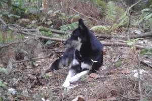 Zgubiła się w lesie podczas grzybobrania. Szczęśliwy finał akcji poszukiwawczej