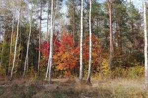 Kobieta zgubiła się w lesie. Znaleźli ją policjanci ostródzkiej patrolówki