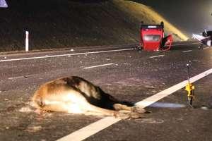 Zwierzęta na drodze! Noga z gazu!