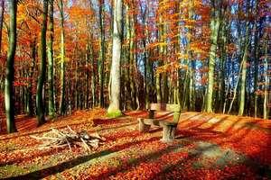 Zdjęcie Tygodnia. Jesień w parku