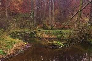 Bobry w Lidzbarku niepokoją mieszkańców