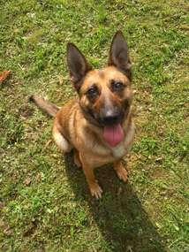 Czuły nos wyszkolonego psa pozwolił na odnalezienie narkotyków